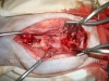 ortopedia-veterinaria-el-toro-5