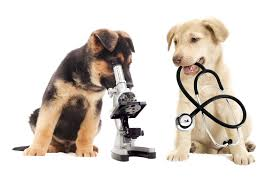 veterinaria-el-toro-hospital-medicina-contemporanea-a-su-alcance