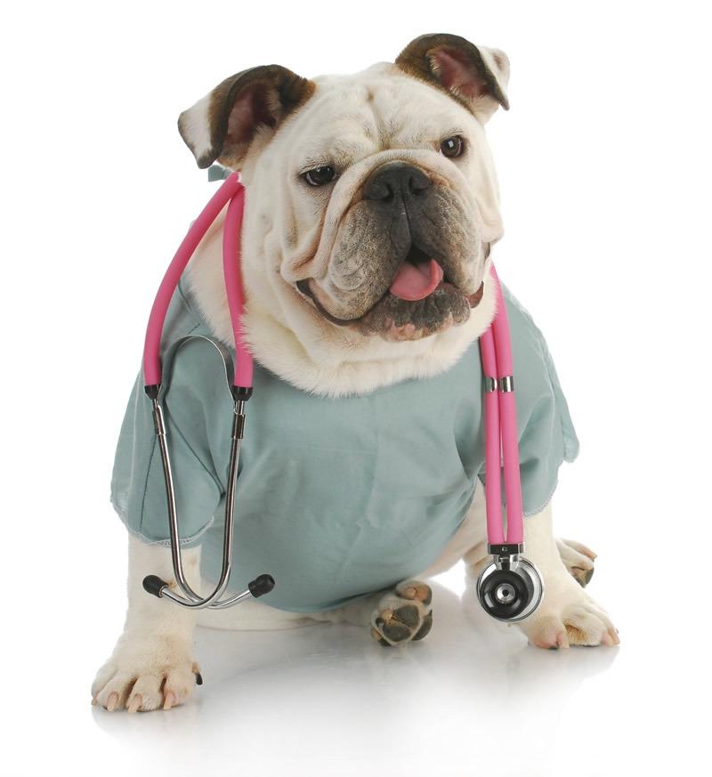 perrito-centro-medico-veterinario-el-toro-de-buga-colombia-mascotas-con-derechos-pet