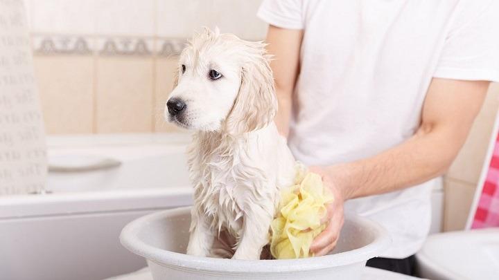 anti-pulgas-garrapatas-piojos-baño-medicado-con-formula-veterinaria-bano-mascotas-perro-gato