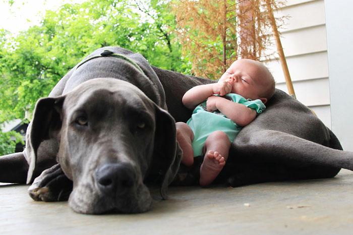 bebes-perros-familia-concentrado